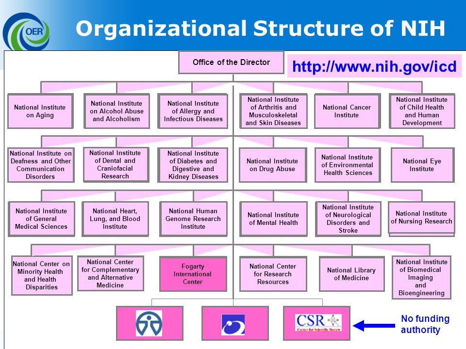 23 Office of the Director National Center on Minority Health and Health Disparities Organizational Structure of NIH   National Institute on Alcohol Abuse and Alcoholism National Institute of Arthritis and Musculoskeletal and Skin Diseases National Cancer Institute National Institute on Aging National Institute of Child Health and Human Development National Institute of Allergy and Infectious Diseases National Institute of Diabetes and Digestive and Kidney Diseases National Institute of Dental and Craniofacial Research National Institute on Drug Abuse National Institute of Environmental Health Sciences National Institute on Deafness and Other Communication Disorders National Eye Institute National Human Genome Research Institute National Heart, Lung, and Blood Institute National Institute of Mental Health National Institute of Neurological Disorders and Stroke National Institute of General Medical Sciences National Institute of Nursing Research National Library of Medicine National Center for Complementary and Alternative Medicine Fogarty International Center National Center for Research Resources National Institute of Biomedical Imaging and Bioengineering No funding authority