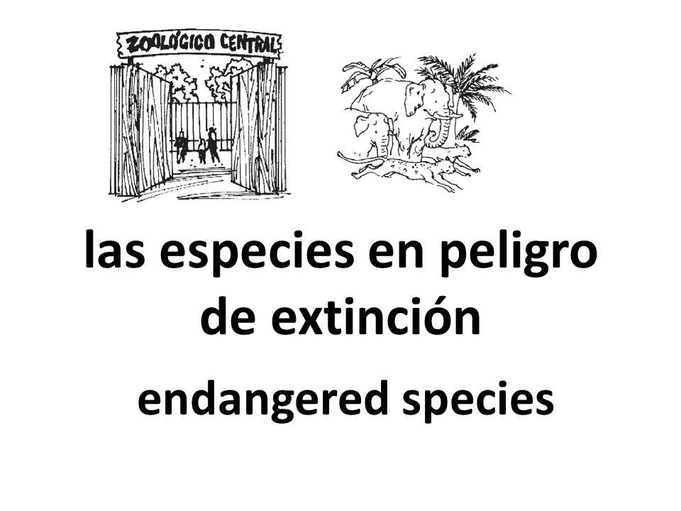 las especies en peligro de extinción endangered species