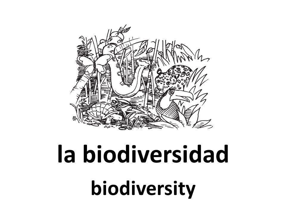 la biodiversidad biodiversity