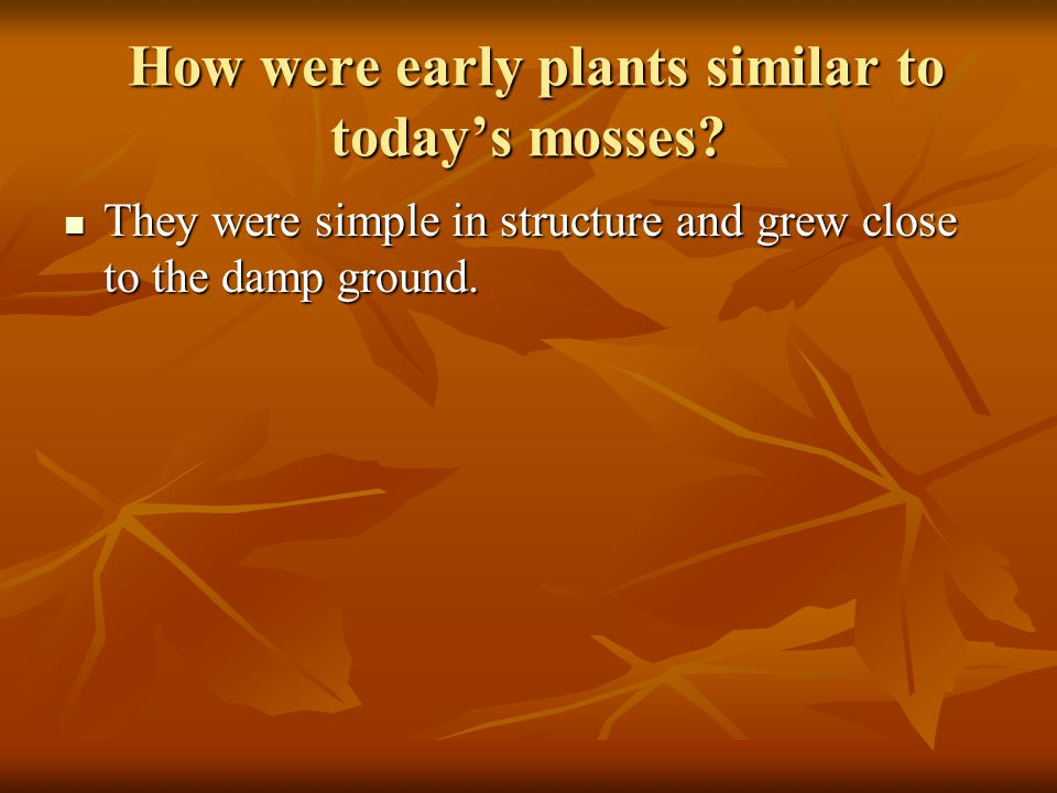 From the first plants, at least two major groups of plants evolved.