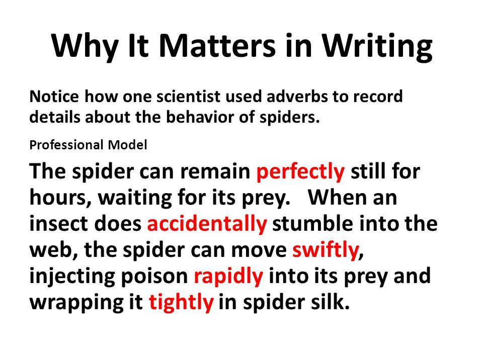 Why It Matters in Writing Notice how one scientist used adverbs to record details about the behavior of spiders.