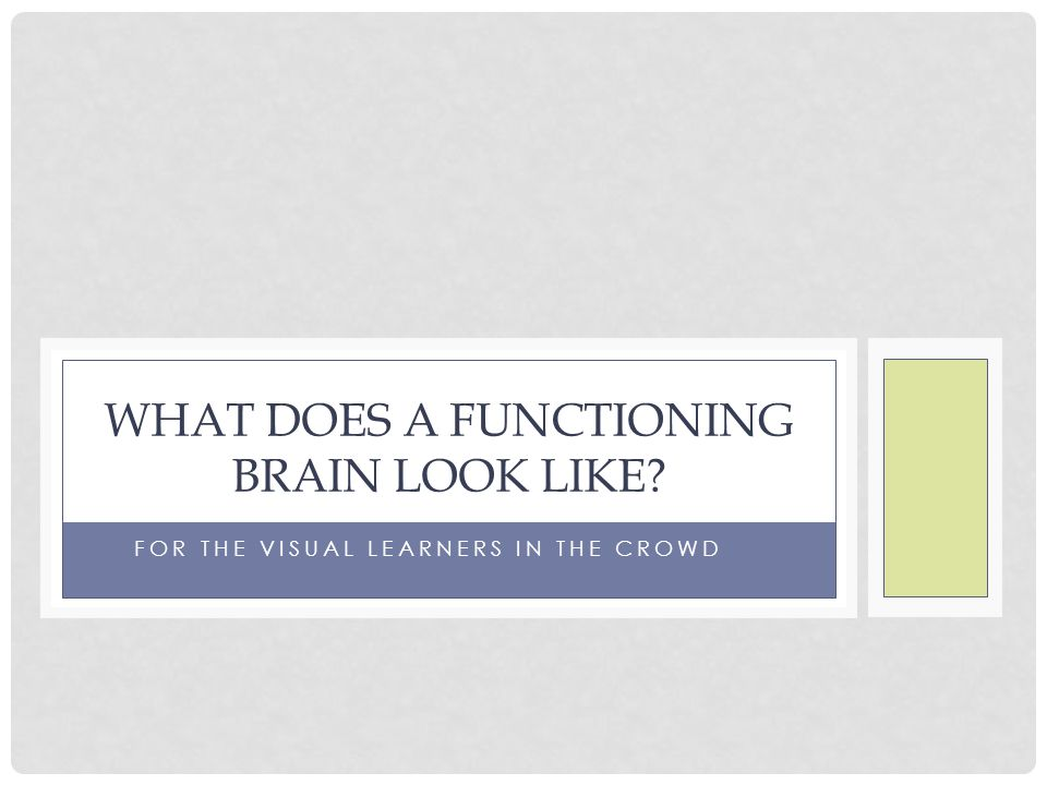 FOR THE VISUAL LEARNERS IN THE CROWD WHAT DOES A FUNCTIONING BRAIN LOOK LIKE?