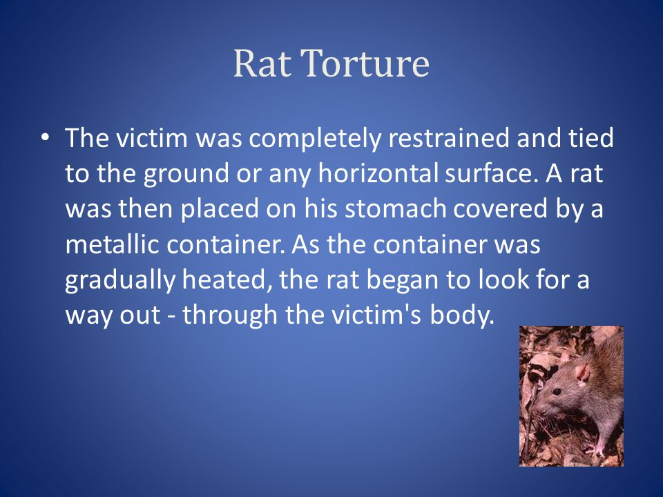 Rat Torture The victim was completely restrained and tied to the ground or any horizontal surface. A rat was then placed on his stomach covered by a m