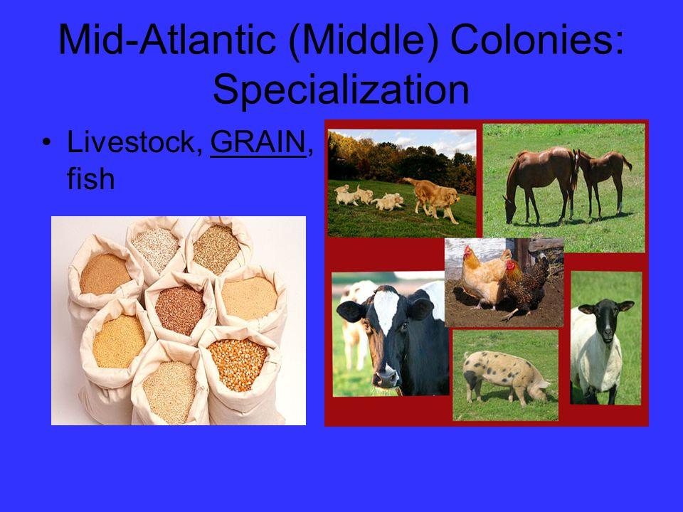 Mid-Atlantic (Middle) Colonies: Specialization Livestock, GRAIN, fish