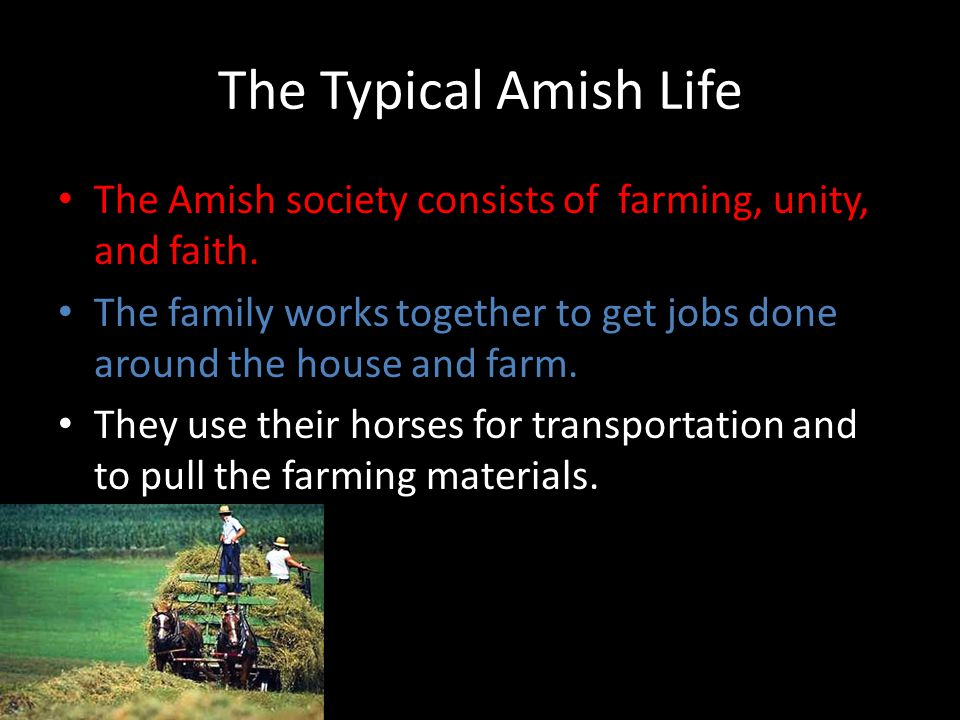 The Typical Amish Life The Amish society consists of farming, unity, and faith. The family works together to get jobs done around the house and farm.