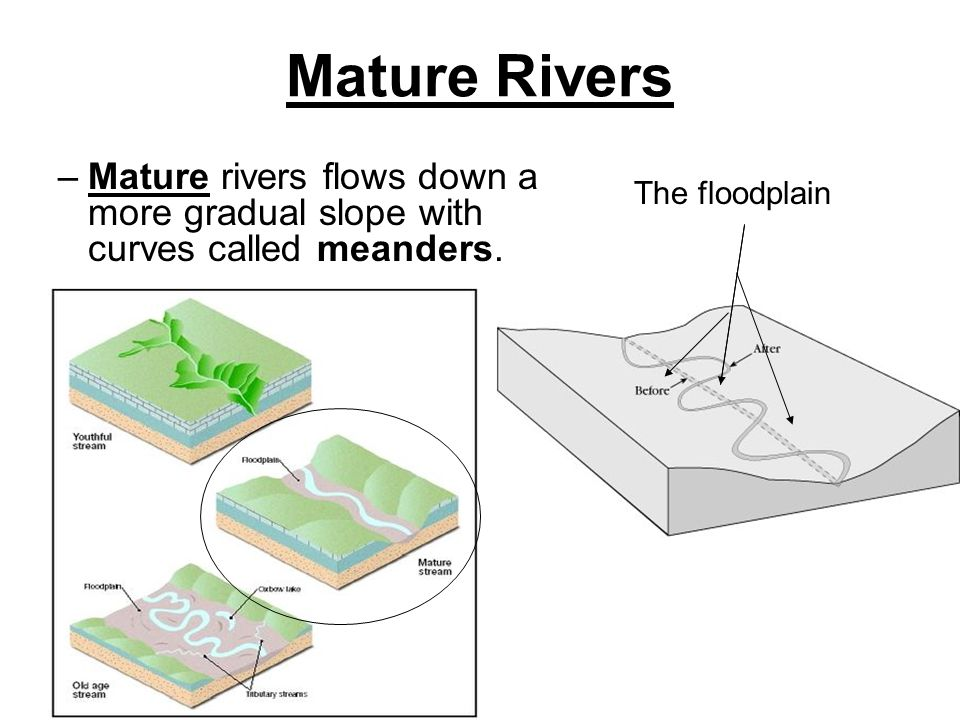 Mature Rivers –Mature rivers flows down a more gradual slope with curves called meanders. The floodplain