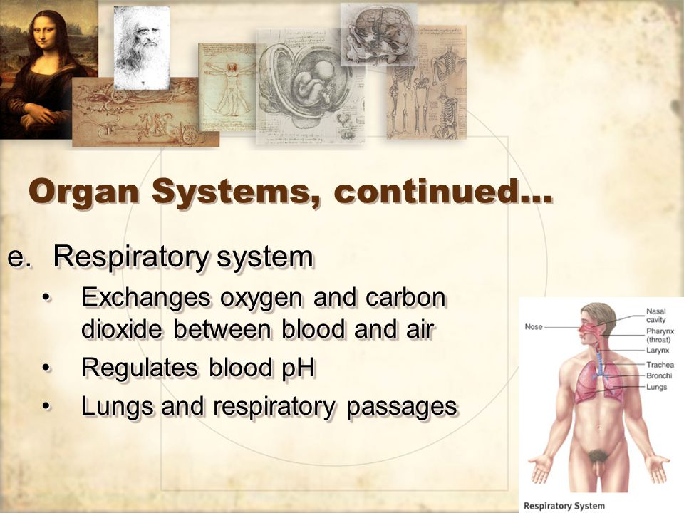 21 Organ Systems, continued… e.Respiratory system Exchanges oxygen and carbon dioxide between blood and airExchanges oxygen and carbon dioxide between blood and air Regulates blood pHRegulates blood pH Lungs and respiratory passagesLungs and respiratory passages e.Respiratory system Exchanges oxygen and carbon dioxide between blood and airExchanges oxygen and carbon dioxide between blood and air Regulates blood pHRegulates blood pH Lungs and respiratory passagesLungs and respiratory passages