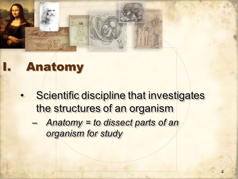 4 I.Anatomy Scientific discipline that investigates the structures of an organismScientific discipline that investigates the structures of an organism –Anatomy = to dissect parts of an organism for study Scientific discipline that investigates the structures of an organismScientific discipline that investigates the structures of an organism –Anatomy = to dissect parts of an organism for study