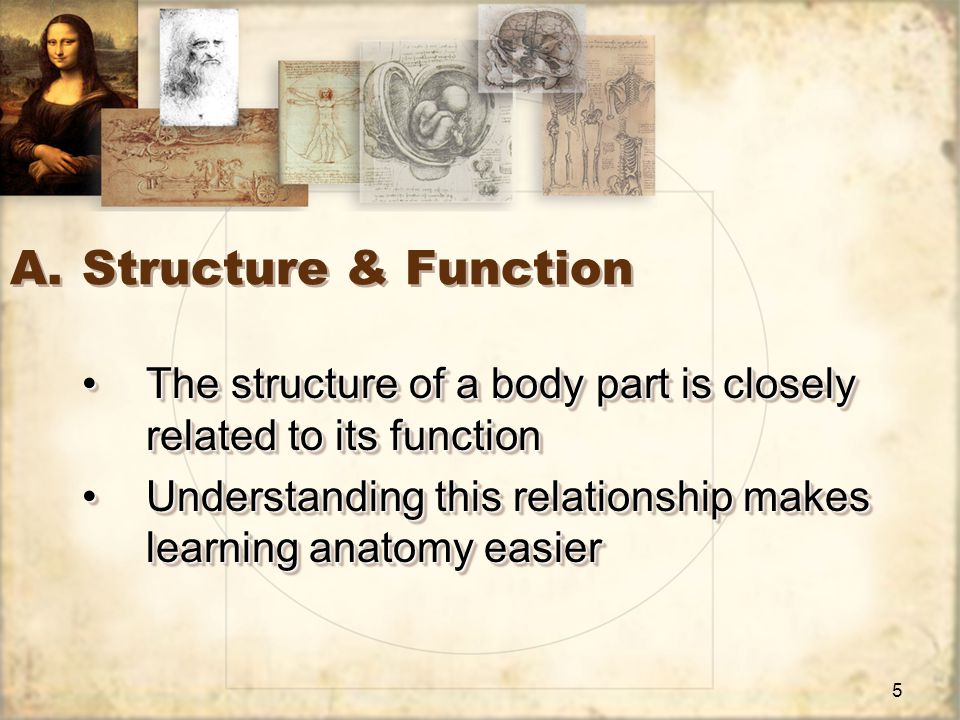 5 A.Structure & Function The structure of a body part is closely related to its functionThe structure of a body part is closely related to its function Understanding this relationship makes learning anatomy easierUnderstanding this relationship makes learning anatomy easier The structure of a body part is closely related to its functionThe structure of a body part is closely related to its function Understanding this relationship makes learning anatomy easierUnderstanding this relationship makes learning anatomy easier