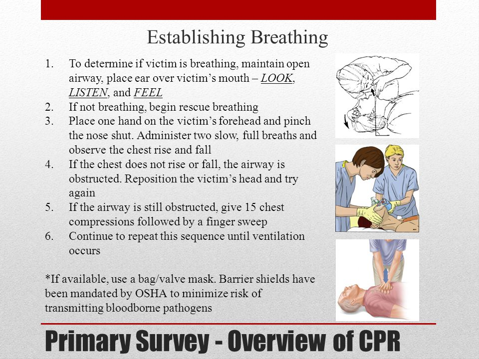 Primary Survey - Overview of CPR Establishing Circulation 1.To determine whether a pulse exists, locate the Adam's apple with the index and middle fingers and then slide down into the groove just under the jaw (carotid artery) 2.Feel for the xiphoid notch, where the ribs meet the sternum 3.Place the heel of one hand just above that notch and the other hand on top 4.Lock elbows with arms straight and shoulders positioned over the hands 5.Apply enough force to depress the sternum 1 ½ to 2 inches and completely release to allow the heart to refill 6.80-100 compressions per minute; maintain a rate of 15 compressions to 2 full breaths 7.After one minute, recheck pulse.