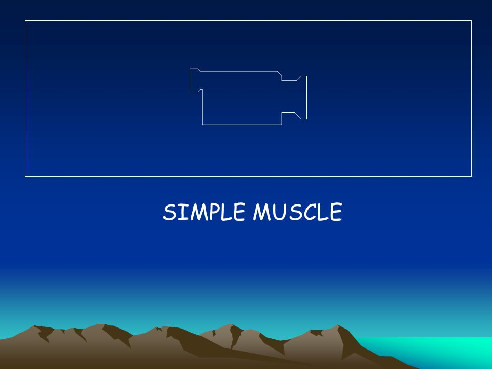 SIMPLE MUSCLE