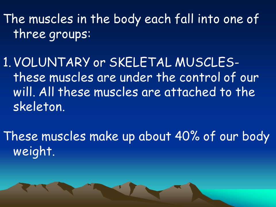 The muscles in the body each fall into one of three groups: 1.VOLUNTARY or SKELETAL MUSCLES- these muscles are under the control of our will. All thes