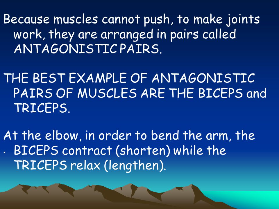 Because muscles cannot push, to make joints work, they are arranged in pairs called ANTAGONISTIC PAIRS.. THE BEST EXAMPLE OF ANTAGONISTIC PAIRS OF MUS