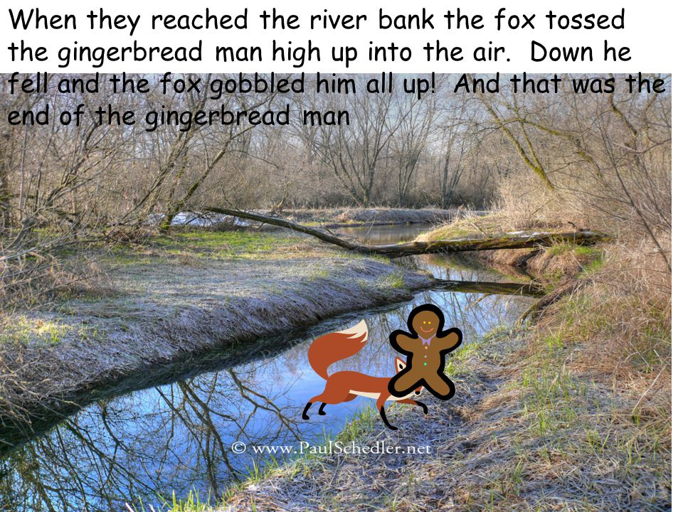 When they reached the river bank the fox tossed the gingerbread man high up into the air. Down he fell and the fox gobbled him all up! And that was th