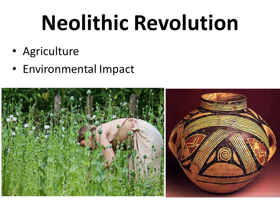 Essay About Neolithic Revolution