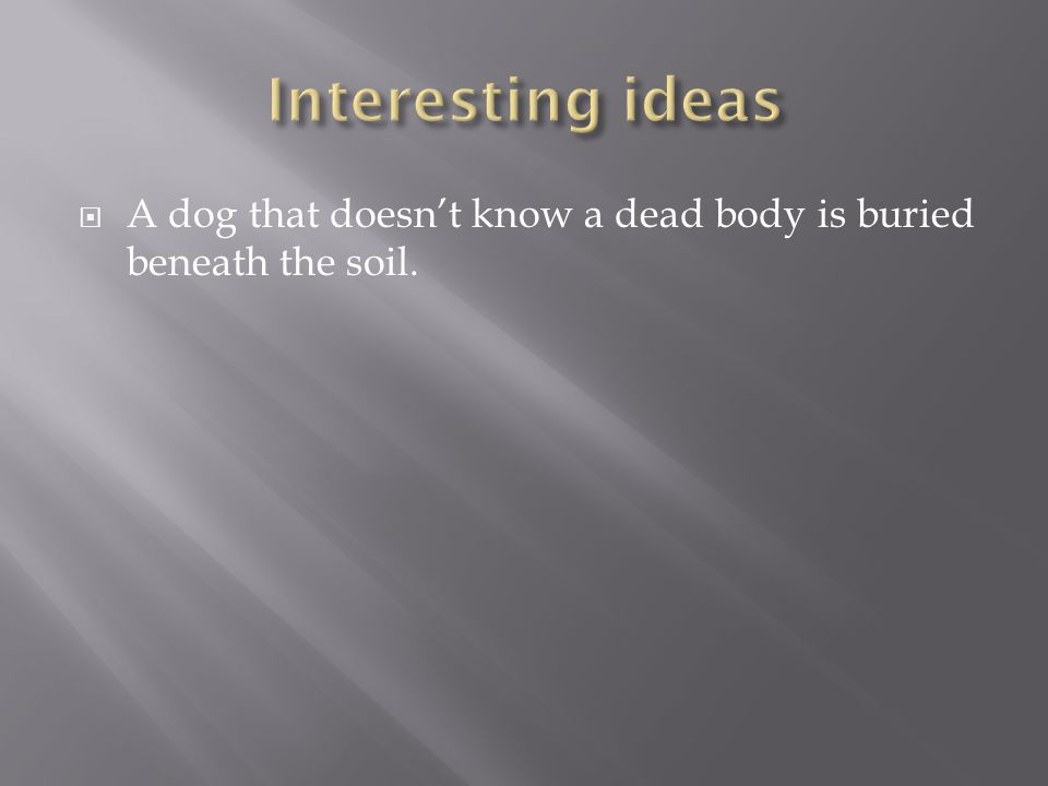  A dog that doesn't know a dead body is buried beneath the soil.