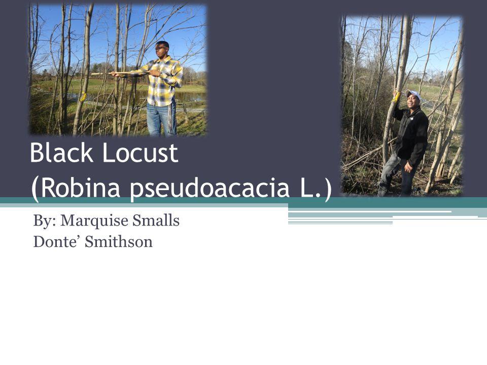 Black Locust ( Robina pseudoacacia L.) By: Marquise Smalls Donte' Smithson
