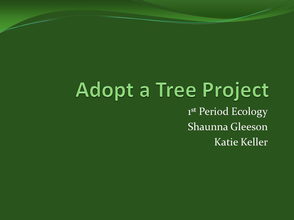 1 st Period Ecology Shaunna Gleeson Katie Keller