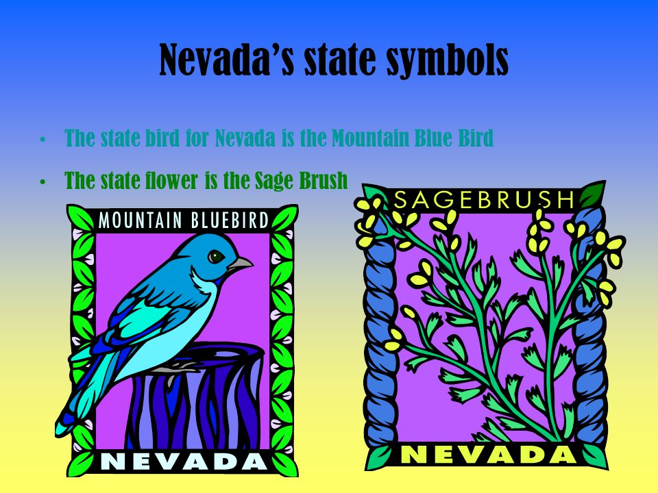 Nevada's state symbols The state bird for Nevada is the Mountain Blue Bird The state flower is the Sage Brush