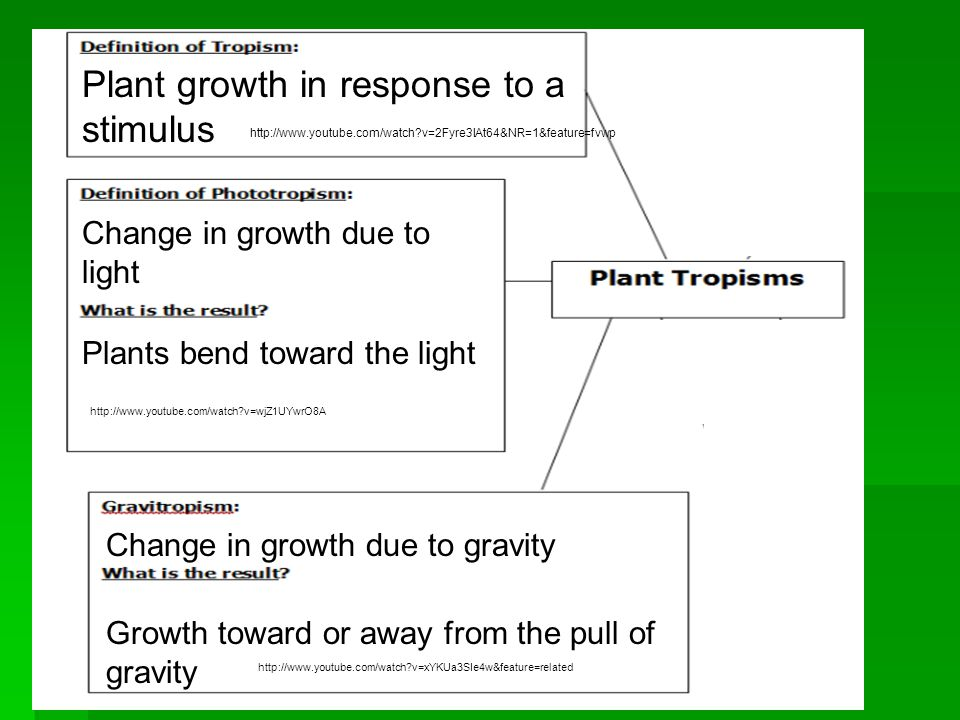 Plant growth in response to a stimulus Change in growth due to light Plants bend toward the light Change in growth due to gravity Growth toward or away from the pull of gravity http://www.youtube.com/watch v=2Fyre3lAt64&NR=1&feature=fvwp http://www.youtube.com/watch v=xYKUa3SIe4w&feature=related http://www.youtube.com/watch v=wjZ1UYwrO8A