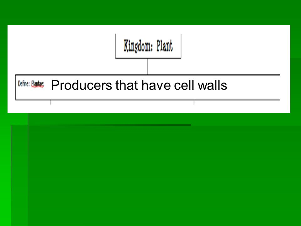 Producers that have cell walls