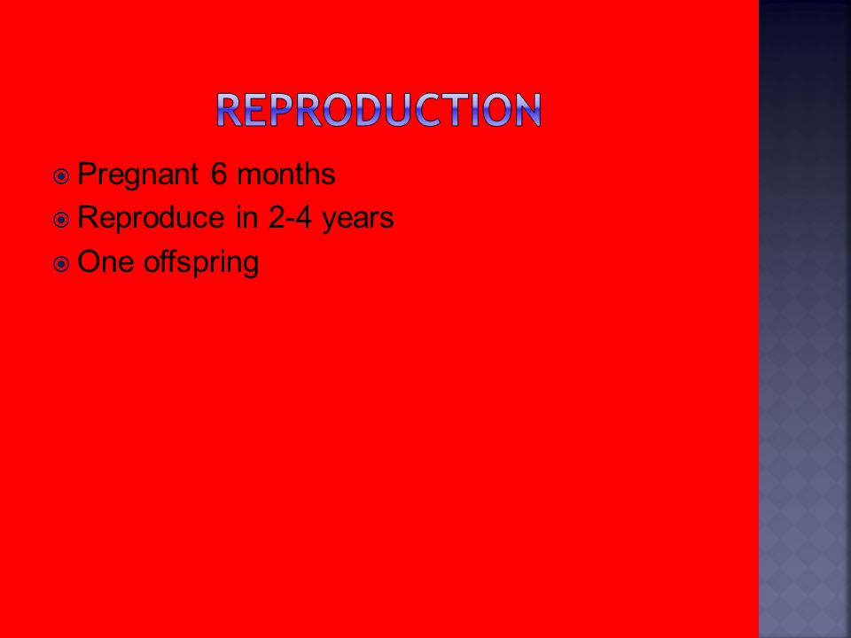  Pregnant 6 months  Reproduce in 2-4 years  One offspring