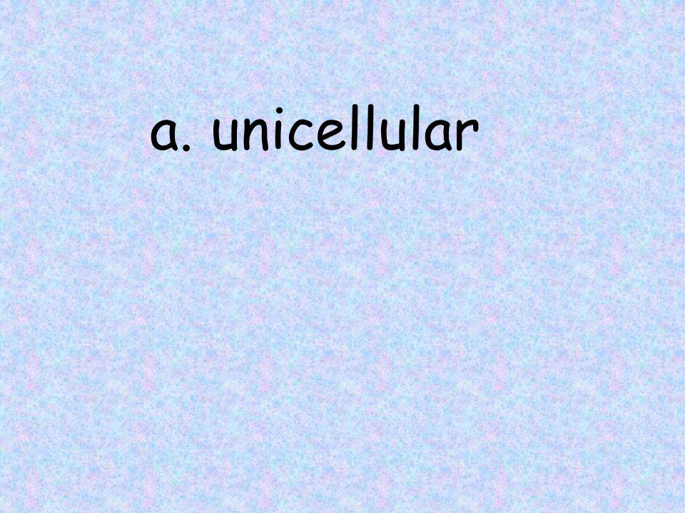 a. unicellular