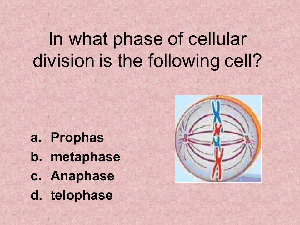 In what phase of cellular division is the following cell.