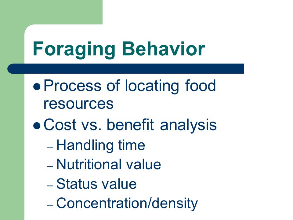 Foraging Behavior Process of locating food resources Cost vs.