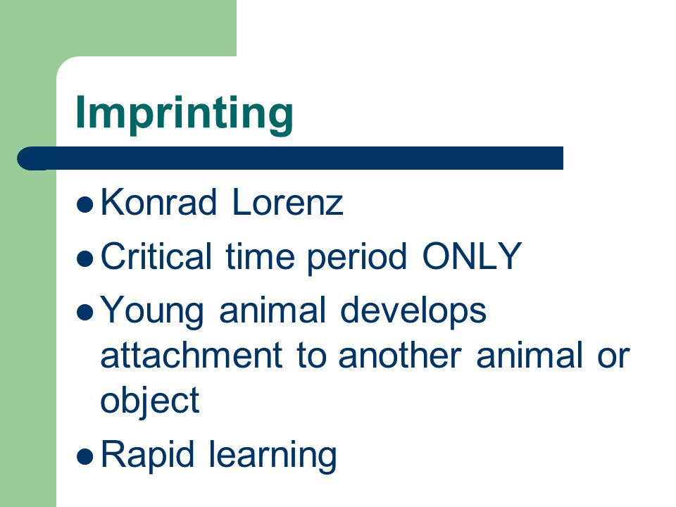 Imprinting Konrad Lorenz Critical time period ONLY Young animal develops attachment to another animal or object Rapid learning