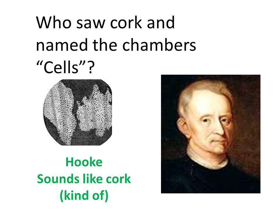 Hooke Sounds like cork (kind of)