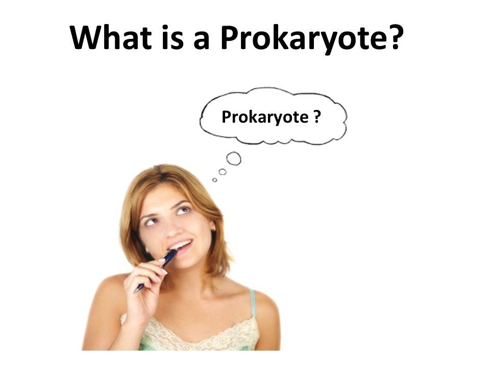 What is a Prokaryote? Prokaryote ?