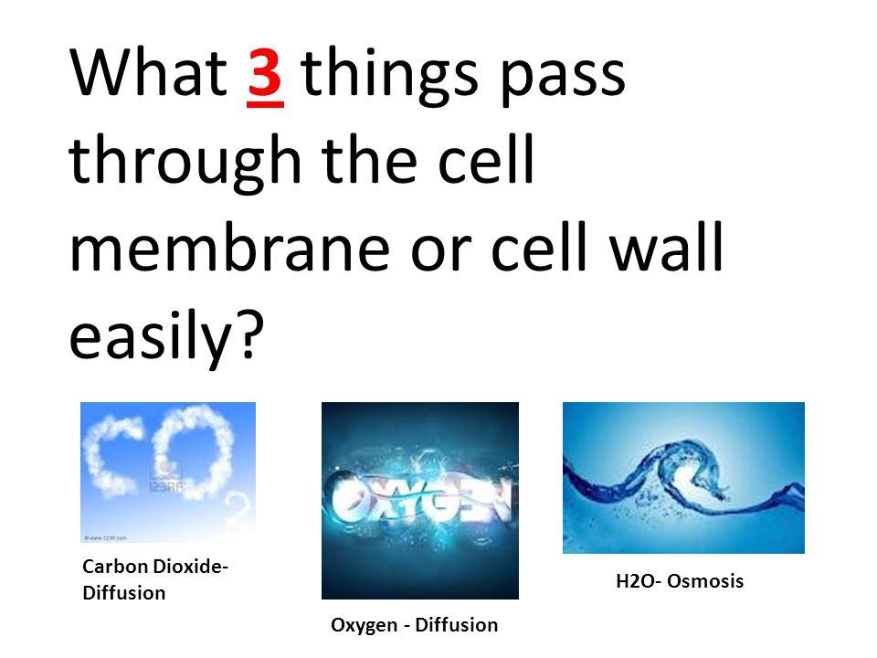 Carbon Dioxide- Diffusion Oxygen - Diffusion H2O- Osmosis