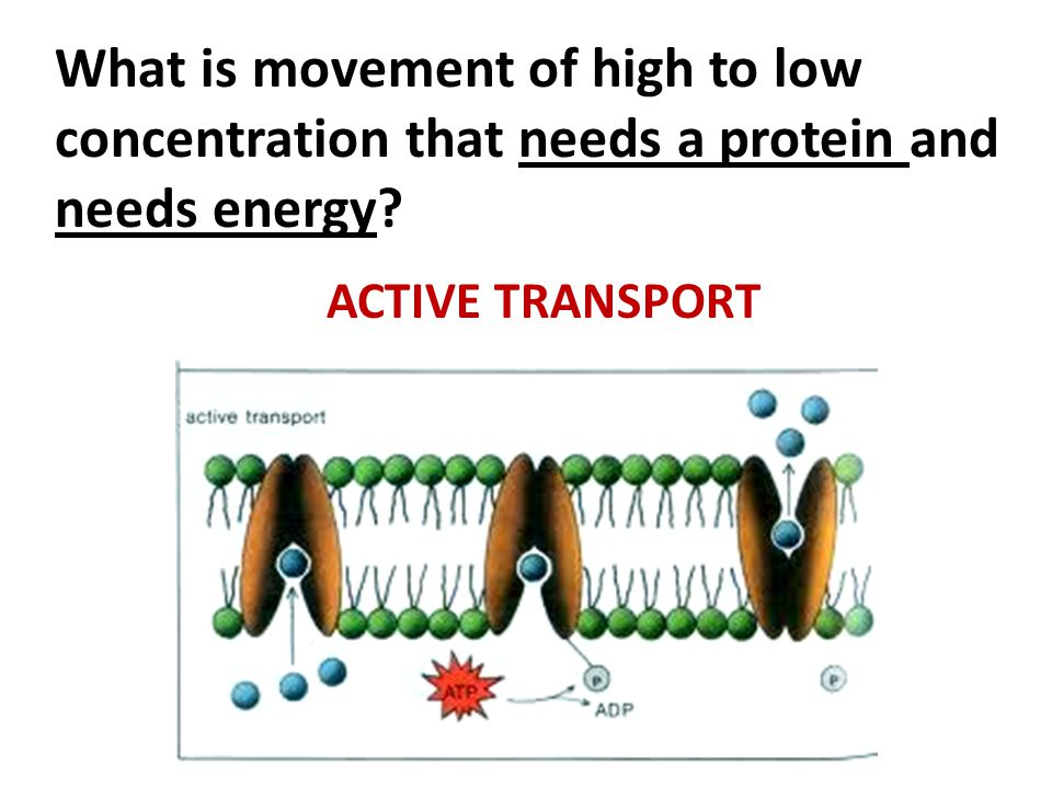 ACTIVE TRANSPORT What is movement of high to low concentration that needs a protein and needs energy?