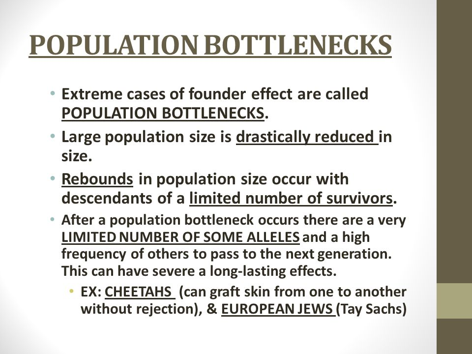 POPULATION BOTTLENECKS Extreme cases of founder effect are called POPULATION BOTTLENECKS. Large population size is drastically reduced in size. Reboun