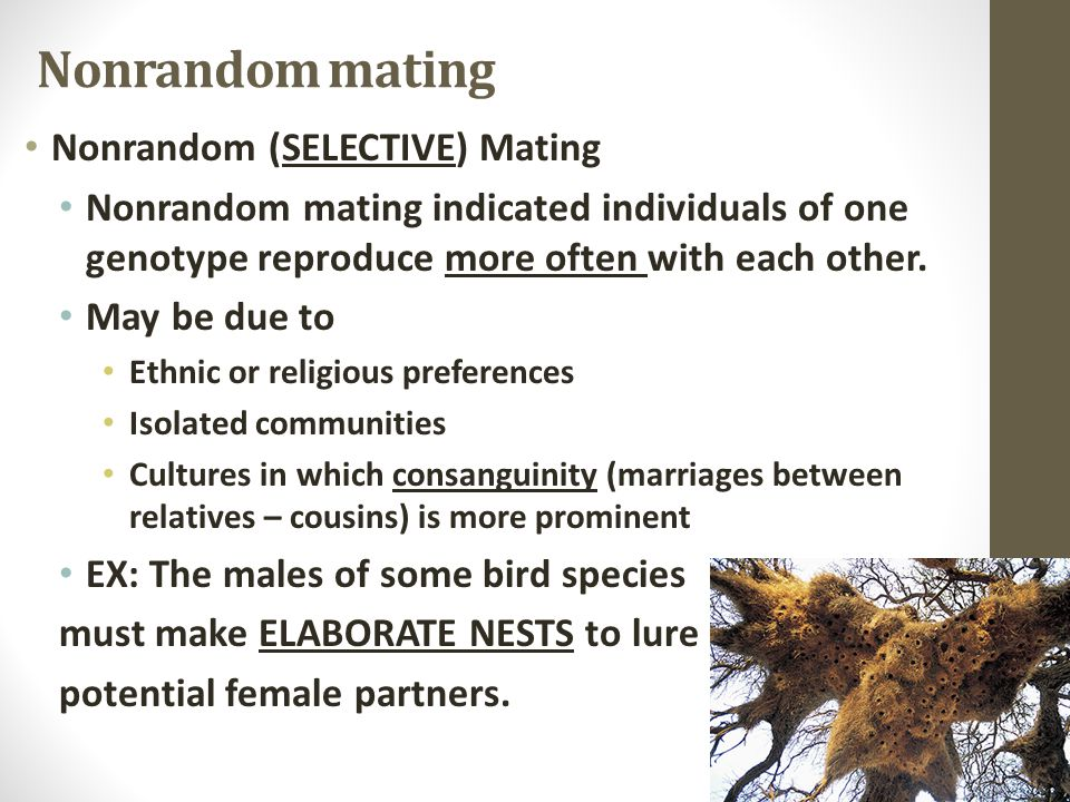 Nonrandom mating Nonrandom (SELECTIVE) Mating Nonrandom mating indicated individuals of one genotype reproduce more often with each other.