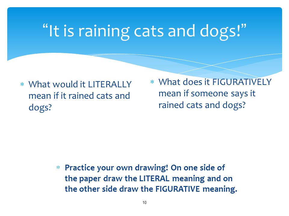 It is raining cats and dogs! 10  What would it LITERALLY mean if it rained cats and dogs.