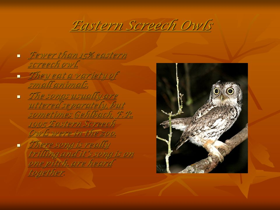Eastern Screech Owls Fewer than 15% eastern screech owl.