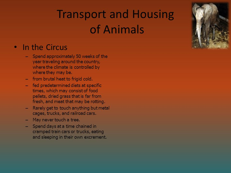 Transport and Housing of Animals In the Circus – Spend approximately 50 weeks of the year traveling around the country, where the climate is controlled by where they may be.