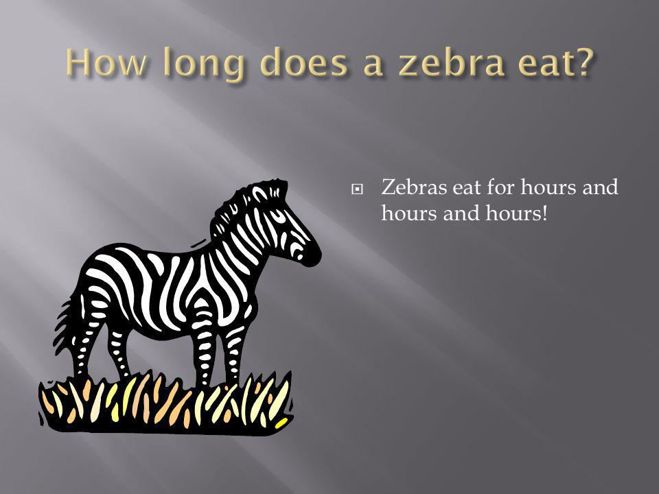  A zebra usually lives up to 25 years old.
