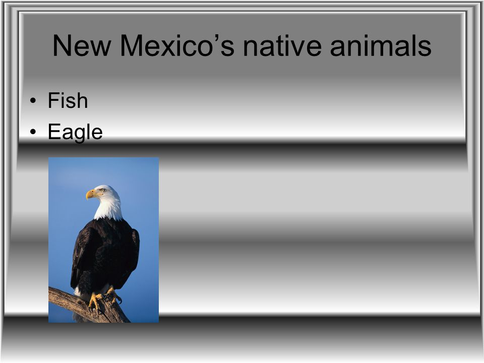 New Mexico's native animals Fish Eagle