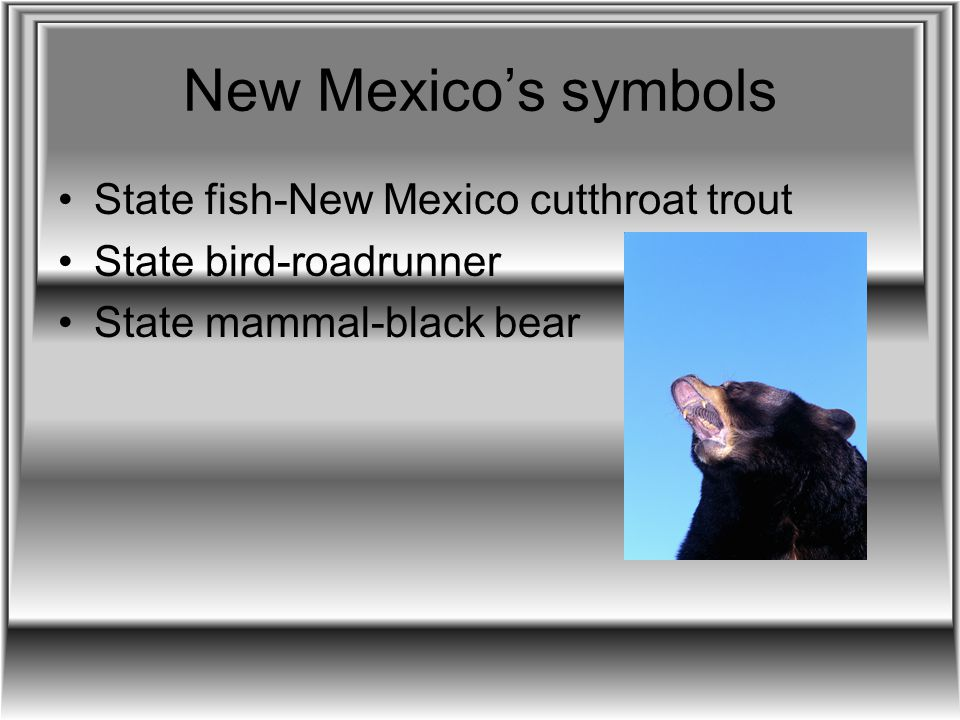 New Mexico's symbols State fish-New Mexico cutthroat trout State bird-roadrunner State mammal-black bear
