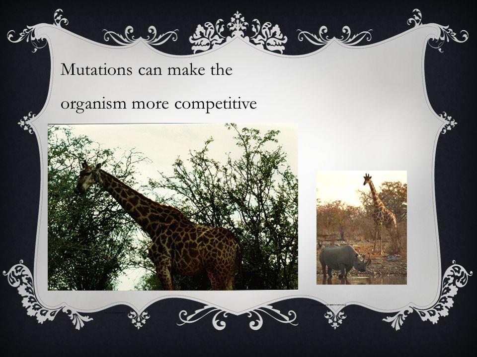 Mutations can make the organism more competitive http://www.wonderquest.com/2003-01-31-giraffe-rhino.jpg http://www.airs.com/ian/giraffe.gif