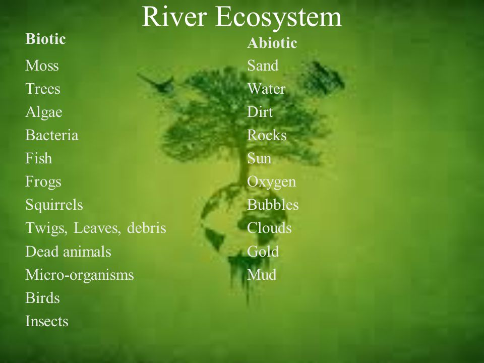 River Ecosystem Biotic Moss Trees Algae Bacteria Fish Frogs Squirrels Twigs, Leaves, debris Dead animals Micro-organisms Birds Insects Abiotic Sand Water Dirt Rocks Sun Oxygen Bubbles Clouds Gold Mud