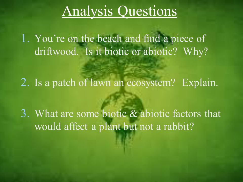 Analysis Questions 1.You're on the beach and find a piece of driftwood.