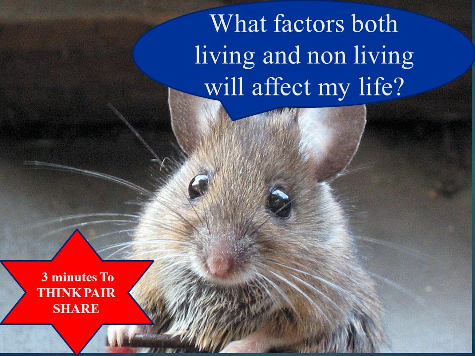 What factors both living and non living will affect my life? 3 minutes To THINK PAIR SHARE