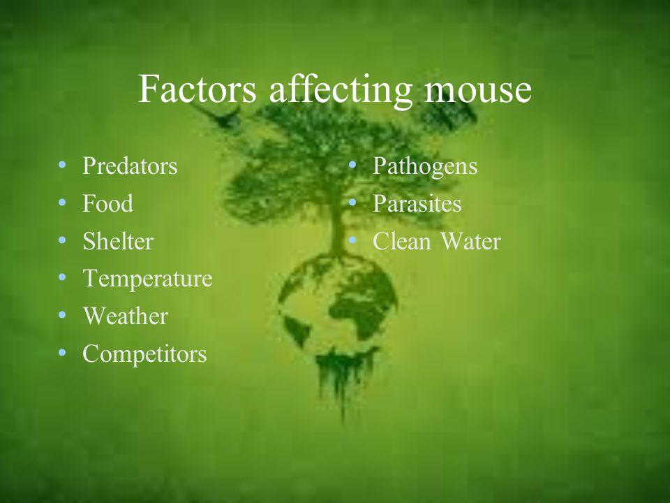 Factors affecting mouse Predators Food Shelter Temperature Weather Competitors Pathogens Parasites Clean Water