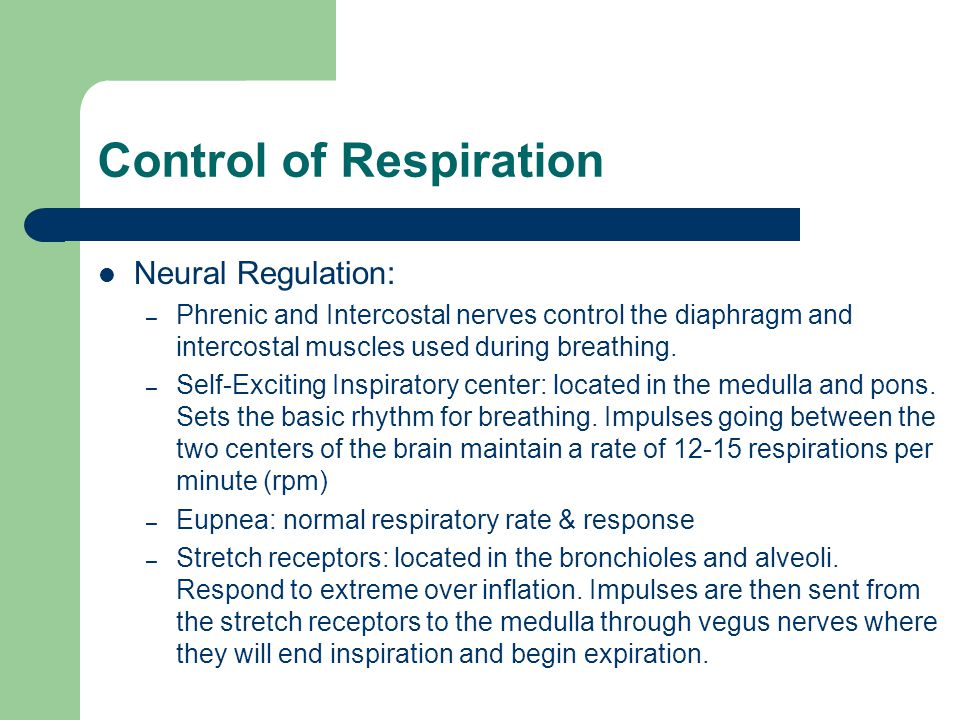 Control of Respiration Neural Regulation: – Phrenic and Intercostal nerves control the diaphragm and intercostal muscles used during breathing.