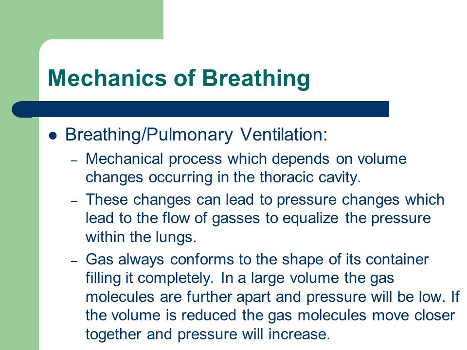 Mechanics of Breathing Breathing/Pulmonary Ventilation: – Mechanical process which depends on volume changes occurring in the thoracic cavity.
