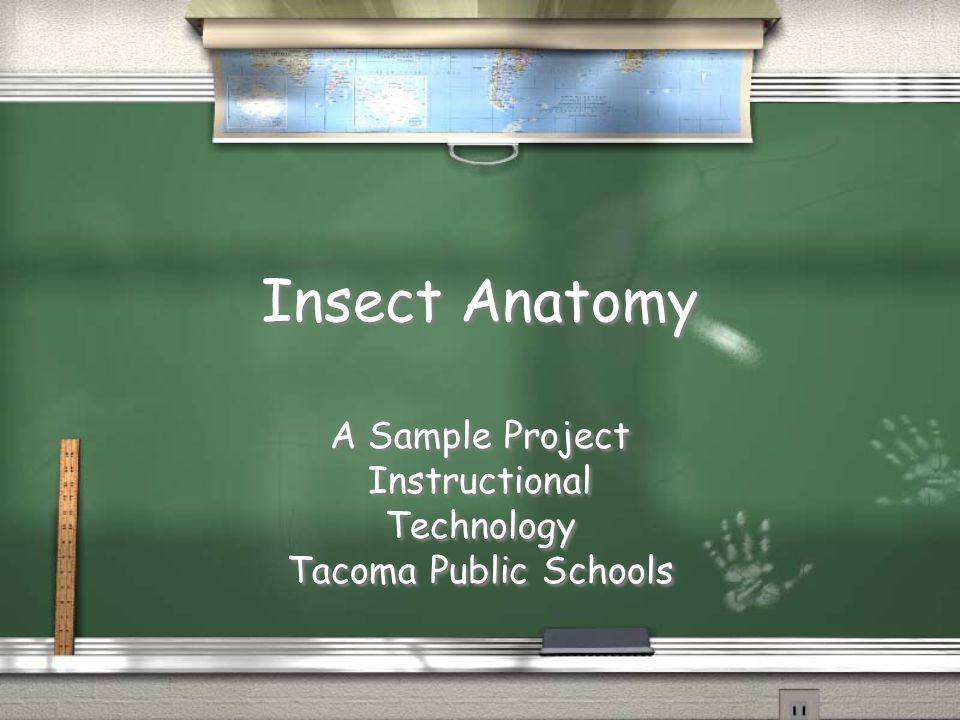 Insect Anatomy A Sample Project Instructional Technology Tacoma Public Schools A Sample Project Instructional Technology Tacoma Public Schools